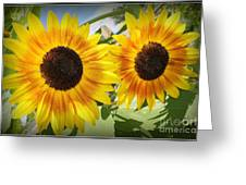 Sunflowers In Full Bloom Greeting Card