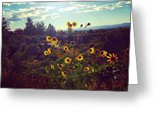 Sunflowers In Sun Light Greeting Card