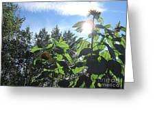 Sunflowers In Sunshine Greeting Card