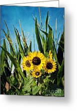Sunflowers In The Corn Field Greeting Card