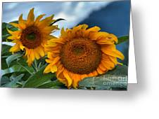 Sunflowers In The Wind Greeting Card
