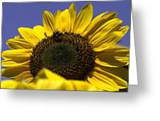 Sunflowers Greeting Card by John Holloway