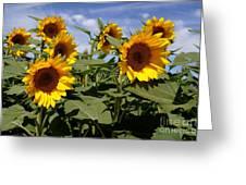 Sunflowers Greeting Card by Kerri Mortenson
