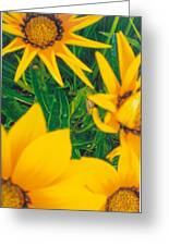Sunflowers Medley Greeting Card by Robert Bray