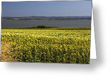 Sunflowers Near The Sea Greeting Card