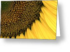 Sunflowers Of Summer Greeting Card