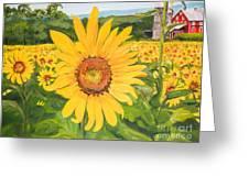 Sunflowers - Red Barn - Pennsylvania Greeting Card