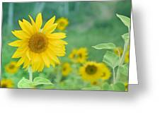Sunflowers Vintage Dreams Greeting Card