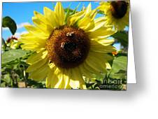 Sunflowers With Bees Harvesting Pollen Greeting Card