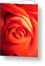 Sunkissed Orange Rose 11 Greeting Card