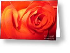 Sunkissed Orange Rose 6 Greeting Card
