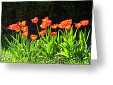 Sunkissed Tulip Garden Greeting Card