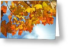 Sunlight And Shadow - Autumn Leaves Two Greeting Card