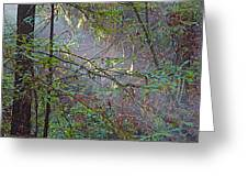 Sunlight Highlights In Armstrong Redwoods State Preserve Near Guerneville-ca Greeting Card