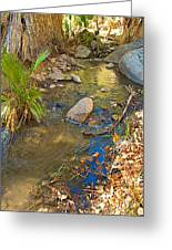 Sunlight On Andreas Creek In Indian Canyons-ca Greeting Card