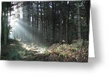 Sunlight On Cannock Chase Greeting Card