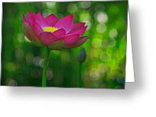 Sunlight On Lotus Flower Greeting Card