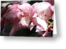 Sunlight On Pink Orchid Greeting Card