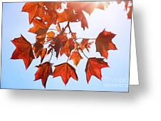 Sunlight On Red Leaves Greeting Card