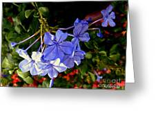Sunlight On The Blues Greeting Card