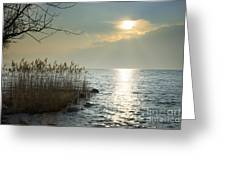 Sunlight On The Lake With Pampas Grass Greeting Card