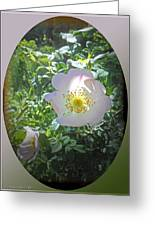 Sunlight On The Wild Pink Rose Greeting Card
