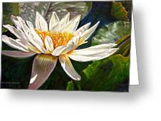 Sunlight On White Lily Greeting Card