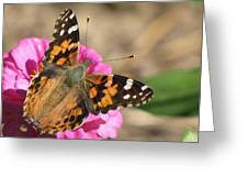 Sunlight On Wings Greeting Card