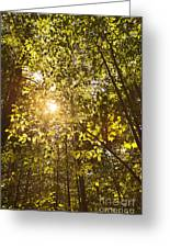Sunlight Shining Through A Forest Canopy Greeting Card