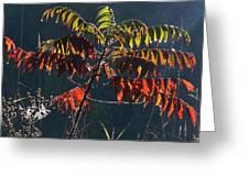 Sunlight Stars On Sumac Greeting Card