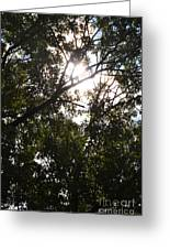 Sunlight Through Branches I Greeting Card