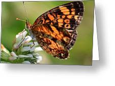 Sunlight Through Butterfly Wings Greeting Card