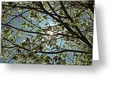 Sunlight Through The Dogwood Greeting Card