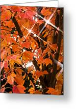 Sunlight Through The Leaves Greeting Card