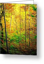 Sunlights Warmth Greeting Card