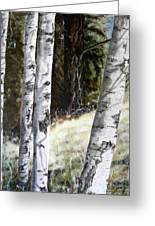 Sunlit Aspens Davis Creek Montana Greeting Card