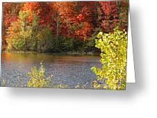 Sunlit Autumn Greeting Card