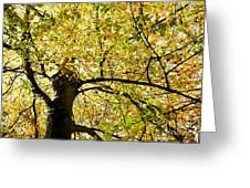 Sunlit Autumn Tree Greeting Card by Natalie Kinnear