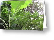 Sunlit Banana With Bamboo Greeting Card