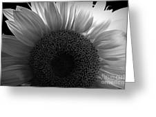 Sunlit Bw Greeting Card