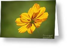 Sunlit Greeting Card