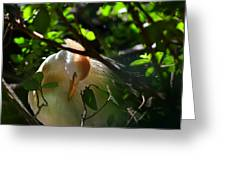 Sunlit Egret Greeting Card