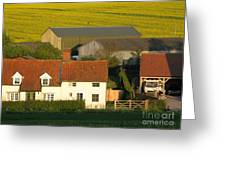Sunlit Farm Greeting Card