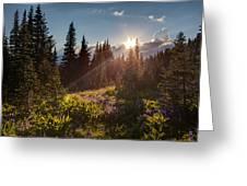 Sunlit Flower Meadows Greeting Card