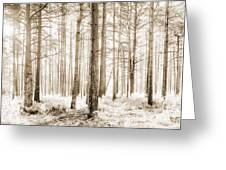 Sunlit Hazy Trees In Neutral Colors Greeting Card
