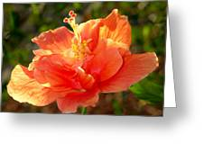 Sunlit Hibiscus Greeting Card