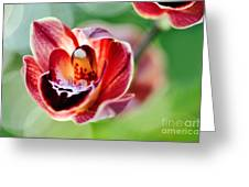Sunlit Miniature Orchid Greeting Card by Kaye Menner