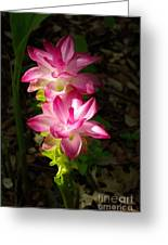 Sunlit Orchids Greeting Card