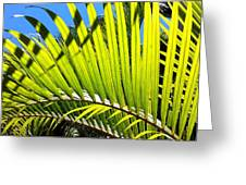 Sunlit Palm Tree  Greeting Card