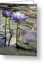 Sunlit Purple Lilies  Greeting Card